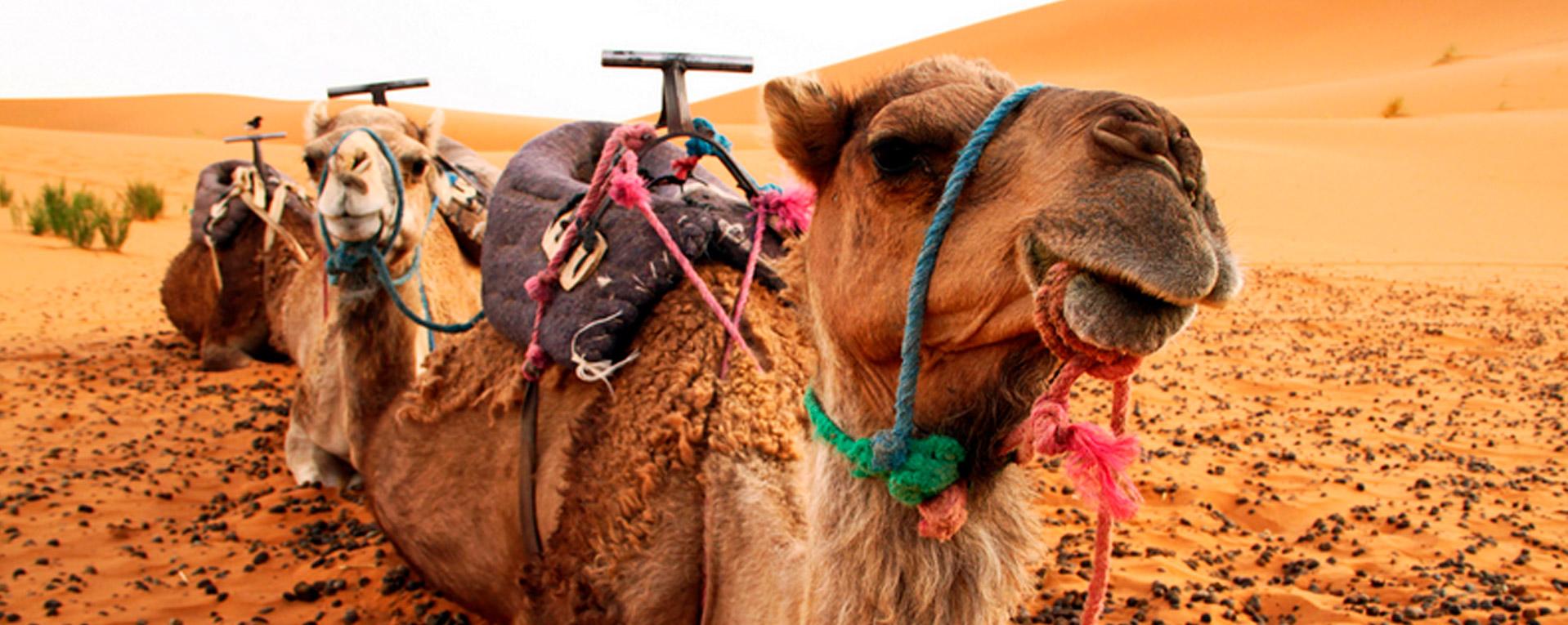 gran-tour-del-marocco-copertina